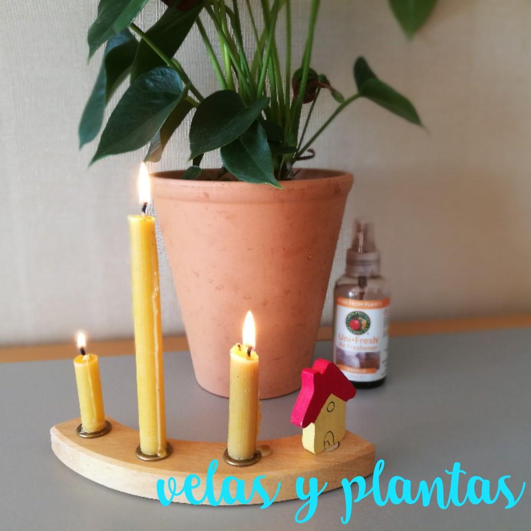 VELAS Y PLANTAS